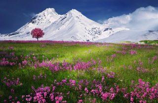 「山や丘の画像をすべて選択してください」と表示された場合の対処法